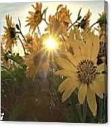 Sun Peaking Canvas Print