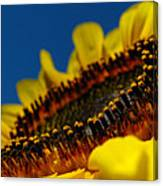 Sunflower Macro Canvas Print