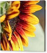 Sunflower Named The Joker Canvas Print