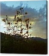 Sunflowers At Sunset Canvas Print