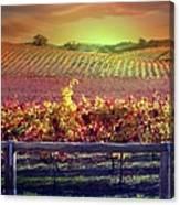 Sunrise Vineyard Canvas Print