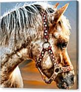 Sunset Pony Canvas Print