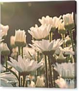 Sunshine Daisies Canvas Print