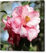 Sweet Camellia Canvas Print