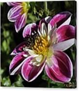 Sweet Nectar Canvas Print
