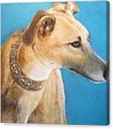 Tan Greyhound Canvas Print