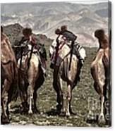 Working Camels Canvas Print