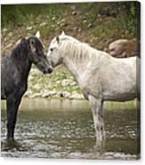 Tender Moments - Wild Horses  Canvas Print