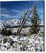 Tetons In The Distance Canvas Print