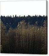 The Back Acres Canvas Print