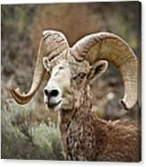 The Bighorn Canvas Print