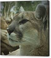 The Cougar 3 Canvas Print
