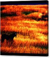 The Golden Grain Of A Sunset Dream Canvas Print