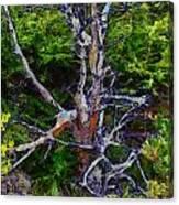 The Graceful Dead Detail Canvas Print