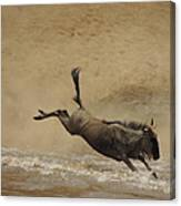 The Great Migration- Wildebeest Crossing  Canvas Print