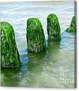 The Green Jetty Canvas Print