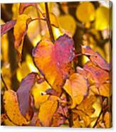 The Heart Of Fall Canvas Print