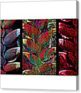 The Many Faces Of Heliconia  Canvas Print