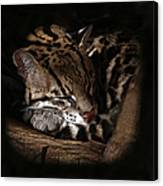 The Ocelot Canvas Print