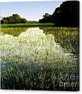 The Pantanal Canvas Print