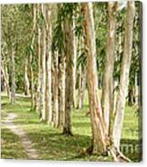 The Path Between The Trees Canvas Print