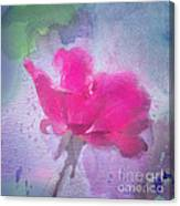 The Scent Of Roses Canvas Print