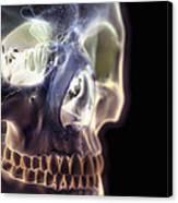 The Skull And Paranasal Sinuses Canvas Print