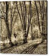 The Spring Forest Canvas Print