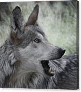 The Wolf 4 Canvas Print