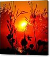 Thistles In The Sunset Canvas Print