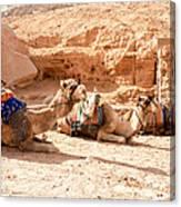Three Camels Canvas Print