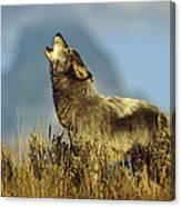 Timber Wolf Howling Idaho Canvas Print