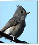 Titmouse Canvas Print