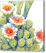 Top Bloomers Canvas Print