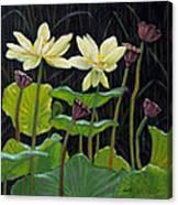 Touching Lotus Blooms Canvas Print