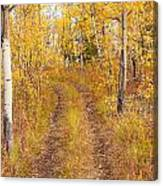 Trail In Golden Aspen Forest Canvas Print