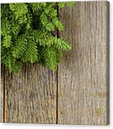 Tree Branch On Rustic Wooden Background Used For Christmas Decor Canvas Print