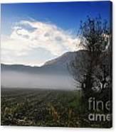 Tree With Fog Canvas Print