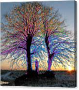 Trees Aglow Canvas Print