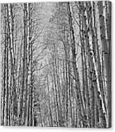 Trees Along A Road, Log Cabin Gold Canvas Print