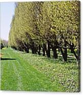 Trees Along A Walkway In A Botanical Canvas Print
