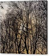 Trees And Late Afternoon Light Canvas Print