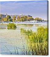 Trees And Reeds Close To The River Canvas Print