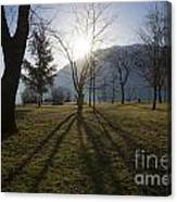 Trees In Backlit Canvas Print