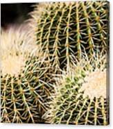 Triple Cactus Canvas Print