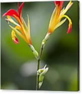 Tropical Flower 6 Canvas Print