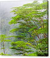 Tropical Forest, Seychelles Canvas Print