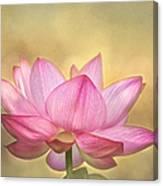 Tropical Lotus Flower Canvas Print