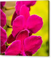 Tropical Orchid Flower Blossoms Canvas Print