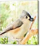 Tufted Titmouse With Seed - Digital Paint Canvas Print